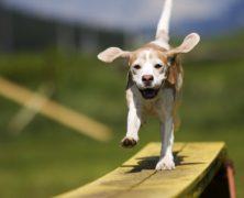Gdzie się uczyć strzyżenia psów