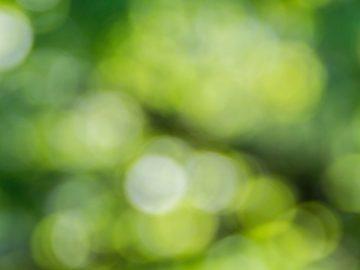 zakładanie zieleni